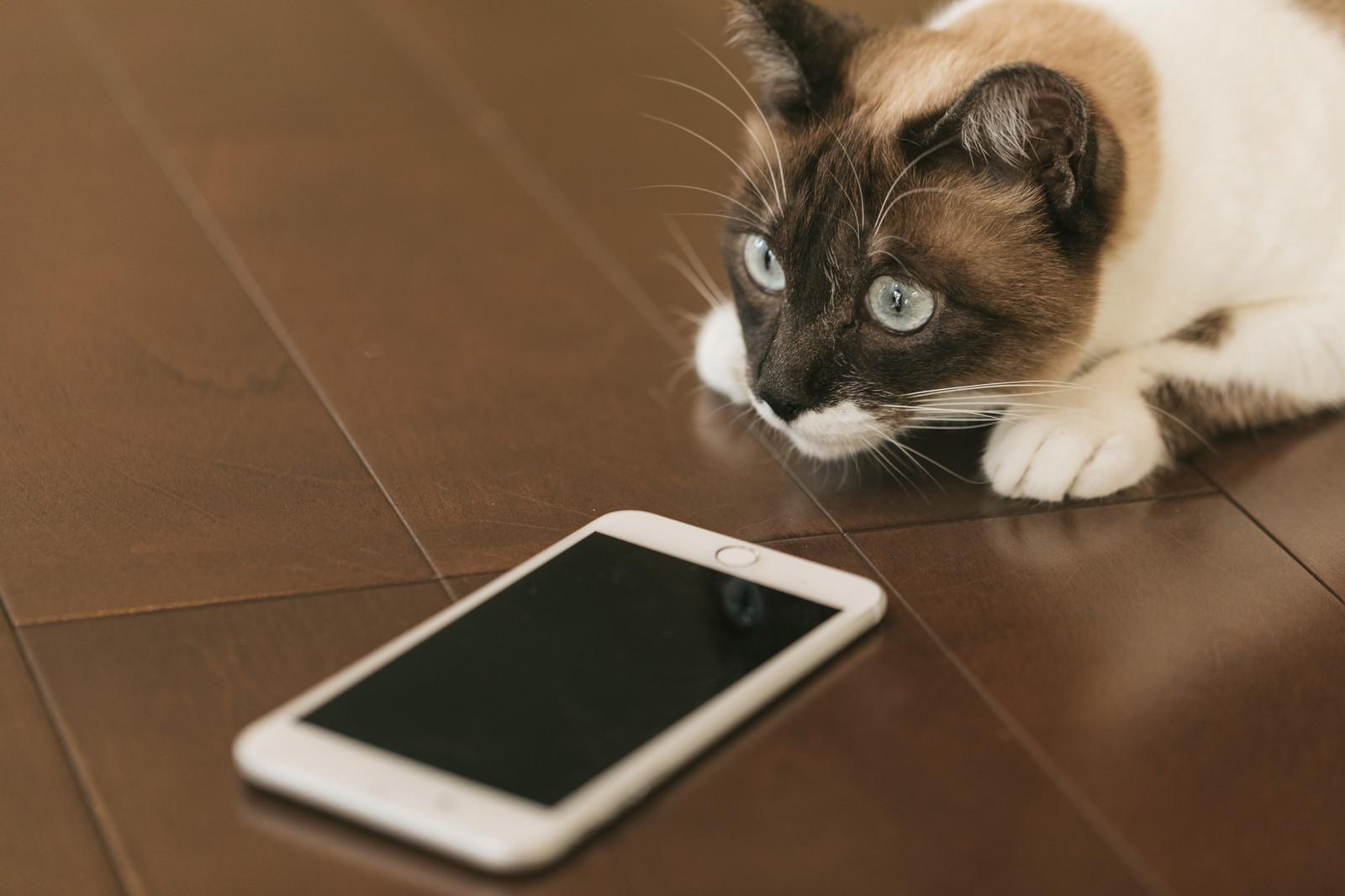 口座振替で契約できる格安SIMの中で、昼も夜も速いのは?